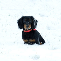 Charlie in the Snow